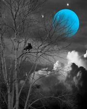 Black White Blue Wall Art, Bird On Tree Branch, Moon, Home Wall Art Picture