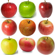 Apple tree 9 differernt varieties 10, 50, 100, 500, 1000 seeds choice listing