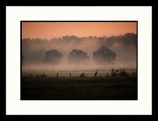 Landscapes 'Fog, East Texas' by Stewart Cohen Framed Photographic Print