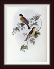 Global Gallery Black Headed Bunting by John Gould Framed Painting Print