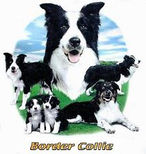 BORDER COLLIE DOG  T-SHIRT IN COLORS WS708