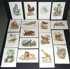 INTERNATIONAL MASTERS PUBLISHERS 1999 ANIMAL ART PRINT CHOICE OF 15 SPECIES NEW