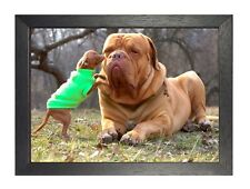 Bullmastive With Chiwawa Dog Puppy Sweet Cute Animal !! NEW Poster A3 A4