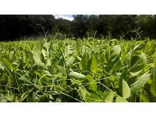 1/4 lb Forage Pea Forage Oat Seed - Food Plot Cover Crop - FREE Shipping!!!