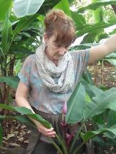 Für Bananen-Freunde .. Winterharte rosa Zwerg-Banane Musa Velutina * Pflanze *