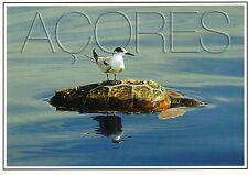 Ansichtskarte: Karrett - Schildkröte und Seeschwalbe - Azoren, Portugal