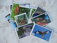 """30 Sticker zum Aussuchen: Edeka/WWF-Sammelaktion-Sticker """" Unser Wald """""""