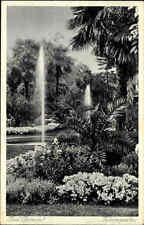 BAD PYRMONT Hameln 1935 Botanik Pflanzen Palmen Garten alte Postkarte mit Park