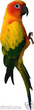 Wild Bird SUN CONURE Parrot Parakeet climbing Pose  - Window Cling Decal Sticker