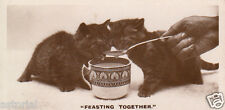 LITTLE CAT * 2 junge Katzen * FEASTING TOGETHER * orig. Sammelbild * 30er Jahre