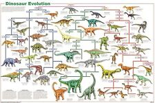 DINOSAUR SPECIES EVOLUTION POSTER (61x91cm) EDUCATIONAL WALL CHART NEW LICENSED