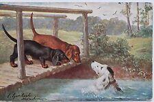 26157 AK 2 spielende Dackel am Bach 1913 PC dachshund