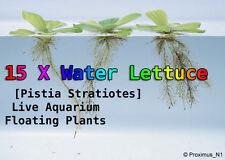 15 X Water Lettuce [Pistia Stratiotes] Live Aquarium Floating Plant