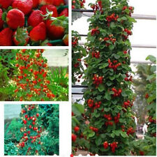 100pcs Red Strawberry Climbing Strawberry Sweet Fruit Plant Seeds Home Garden