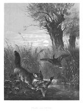 Fuchs und Wildente, Original-Lithographie von ca. 1880