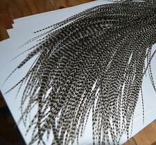 """Real Feather Hair Extensions 10 Grizzly 7-11"""" Metz/Whiting Genetic UK Seller"""