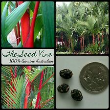 5 LIPSTICK PALM SEEDS (Cyrtostachys renda) Rare Colourful Tropical Indoor Plant