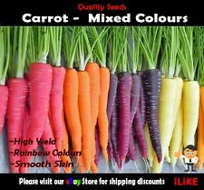 Carrot Mixed Colours 100 Seeds Minimum. Vegetable Garden Plant. Very Unusual.