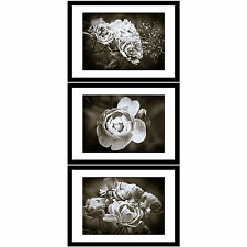 Monotone Black White Rose Flower Floral Blooms Set of 3 Framed Prints Pictures