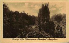 AMELINGHAUSEN b. Lüneburg Heide AK Holtersberg Wacholder Weg Botanik um 1920