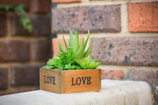 Artificial Plastic Succulent Plant Home Office Table Decor or Wedding Party