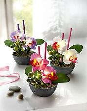 3 Deko Orchideen Orchidee mit LED Beleuchtung Kunstpflanzen Frühlingsdeko  NEU