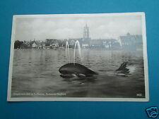AK Walfang Wal - Bodensee Walfisch Friedrichshafen 1935  - G