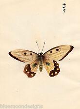 Original japanische Gouache 1910 Schmetterling Butterfly Miniatur Malerei gelb