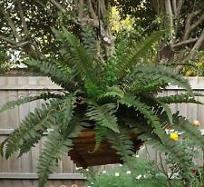 ** 1  BOSTON FERN two TONED GREEN*Artificial Plant * New *BASKET NOT INCLUDED
