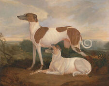 Two Greyhounds in a Landscape Charles Hancock Tiere Hunde Windhunde B A3 01071
