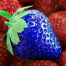 100pcs Delicious Blue Strawberry Seeds Vegetables Fruit Seed Blue