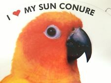 ON SALE! Sun Conure Parrot Exotic Bird Vinyl Decal Bumper Sticker