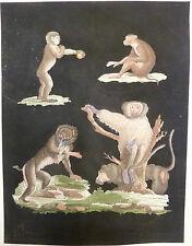 Affen, Aquarell Stahlstich Affen, Affe, graphik Affen,