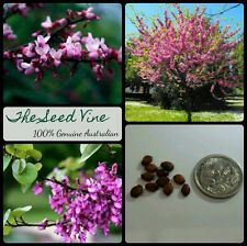 10 JUDAS TREE SEEDS (Cercis Siliquastrum) Eastern Redbud Pink Red Flower Bible