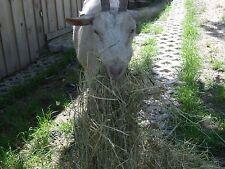 Heu, 2. Schnitt, Bio 18,5 kg/Karton Futter für Hasen, Kaninchen, Schafe, Ziegen