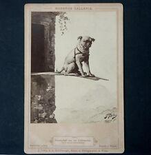Altes Kabinettfoto,CDV,J.Löwy Wien, süßes Hunde Foto,17 x 11 cm,Cabinet Photo