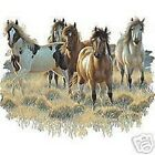 Prairie Paints  Horse  Tshirt    Sizes/Colors