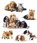 new cute dogs greeting card dog puppies mum dad puppy birthday greetings cards