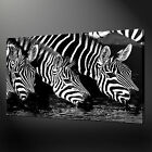 ZEBRAS QUALITY CANVAS PRINT PICTURE WALL ART HOME DECOR FREE UK DELIVERY