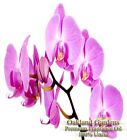 Orchid Fragrance Oil - 100% Pure Premium Grade Oil - heady, intoxicating fragran