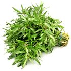 Savory Seeds You Pick Packet Size We have Tons of Herb Seed Varieties! 167
