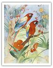 Macaws New World Parrots Flowers Vintage Painting Art Poster Print Giclee