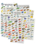 FISH SEA LIFE ID CARDS WATERPROOF - ALL OCEANS