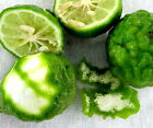 lime peel powder - Kaffir Lime PEEL POWDER for Cooking or Herbs from Organic source Thailand