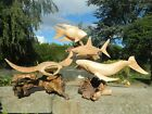 Wooden Sea Life Carvings - Hand Carved Fish Shark Whale Turtle - Assorted