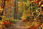 Autumn Path through a Forest Autumn Leaves Colours Canvas Picture Wall Art
