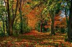 Autumn Forest Autumn Woods Trees Leaves Fall Colours Canvas Picture Wall Art