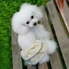 New Pet Physiological Pants Lovely Lace Female Dog Outdoor Panties Puppy Briefs