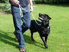 Extra Long 4M Very Strong Dog Training Rope Slip Lead Stop Pulling Gundog Leash