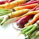 Rainbow Mix Carrot Seed Easy Grow Mix Red Purple Orange White Yellow Colors #258